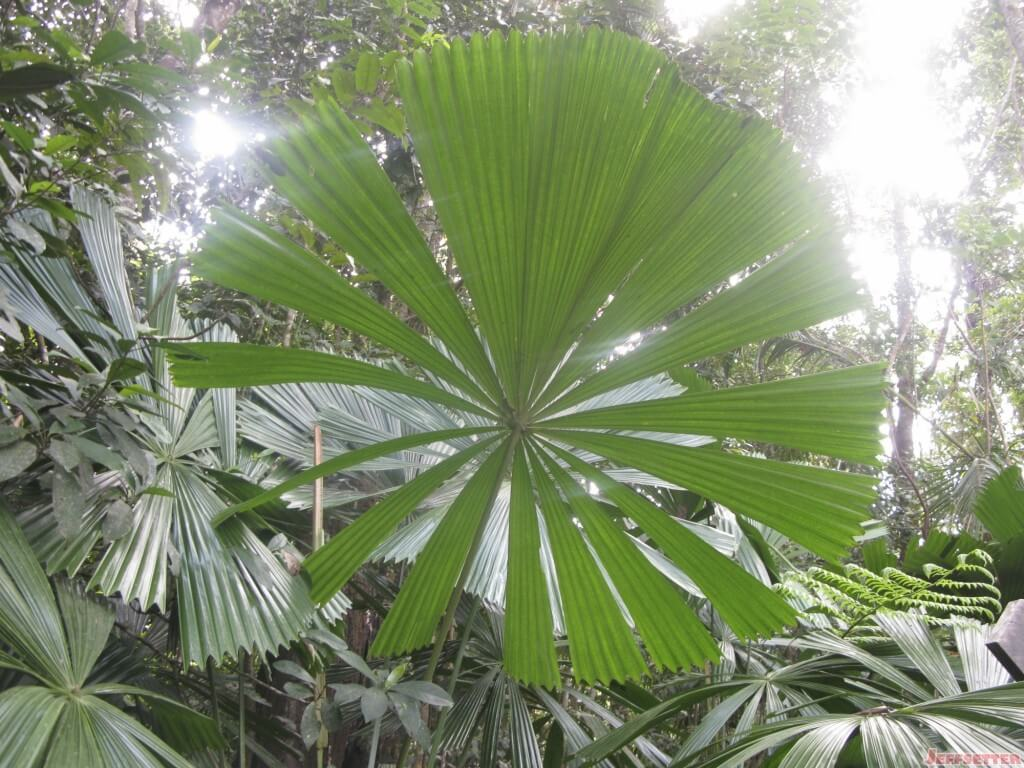 Forest Fan
