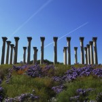[Friday Photo] Original US Capitol Columns at the National Arboretum