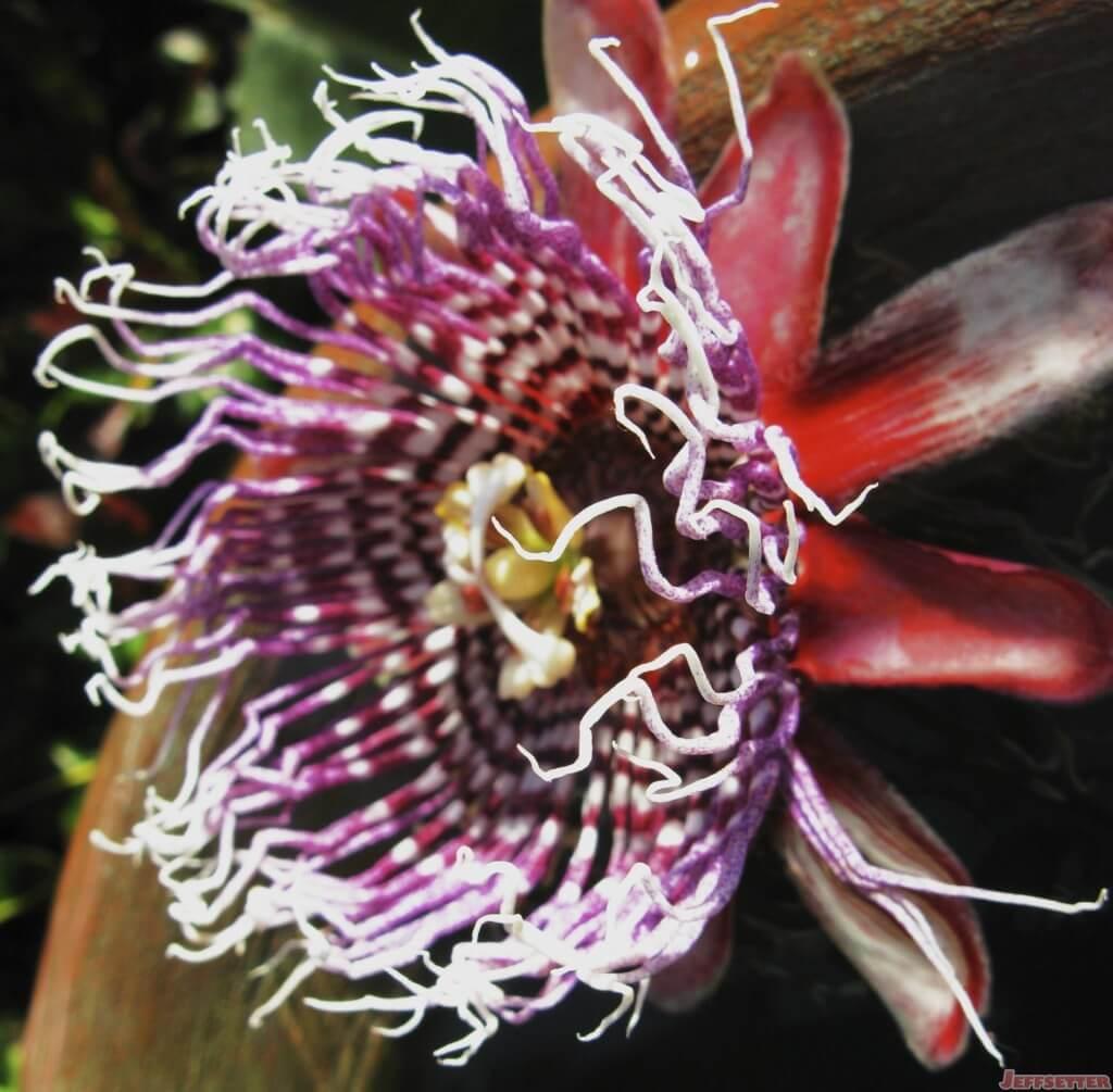 Unique Flower from Washington DC Conservatory