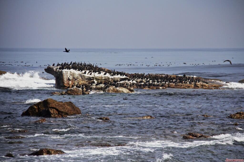 Cape Town 607