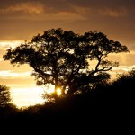 Sunrise Over Modlito Private Game Reserve, South Africa [Photo of the Week]