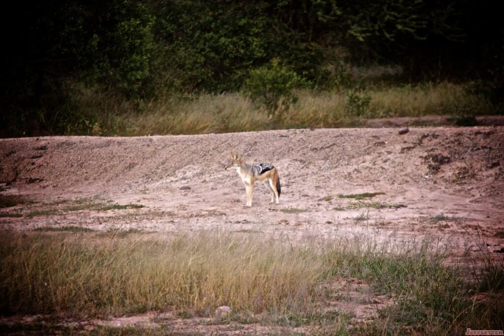 Vuyani Safari 115