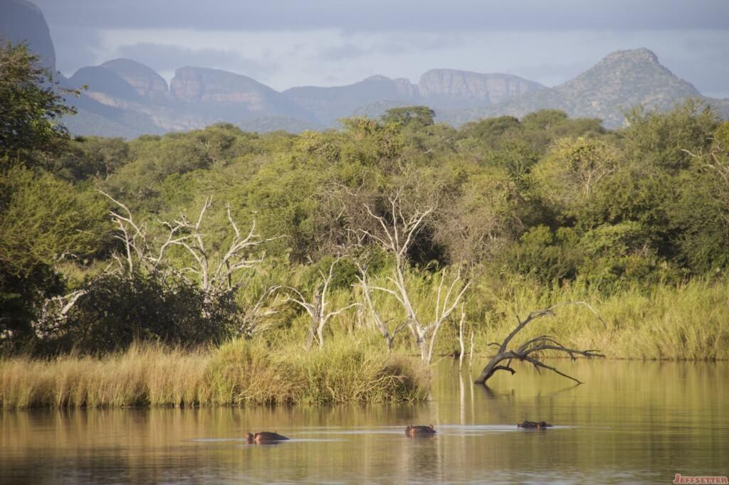 Vuyani Safari 188