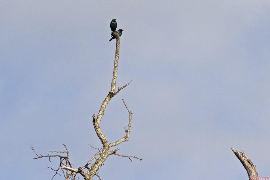 Vuyani Safari 193