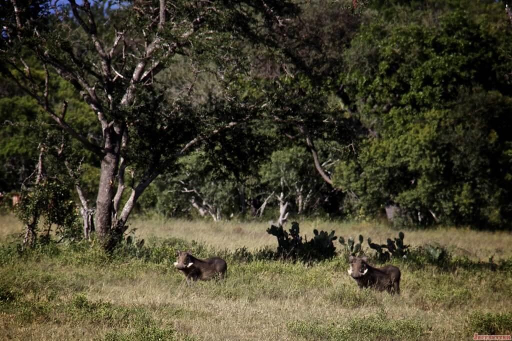 Vuyani Safari 201 (1)