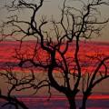 Vuyani Safari 270