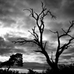 Black and White Overcast Sky in South Africa [Photo of the Week]