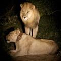 Vuyani Safari 31