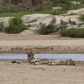 Vuyani Safari 34