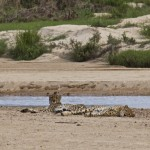 My South Africa Safari Experience Part 1: Cheetah's and Hippos