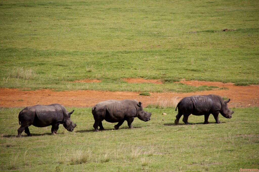 Vuyani Safari 5