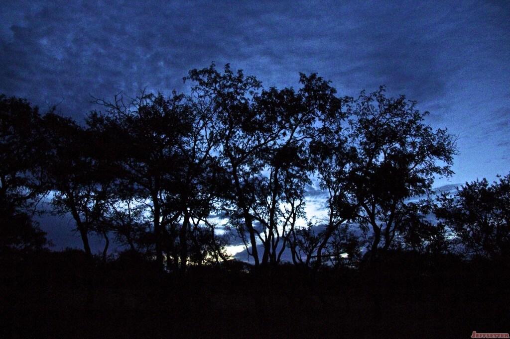 Vuyani Safari 71 (1)