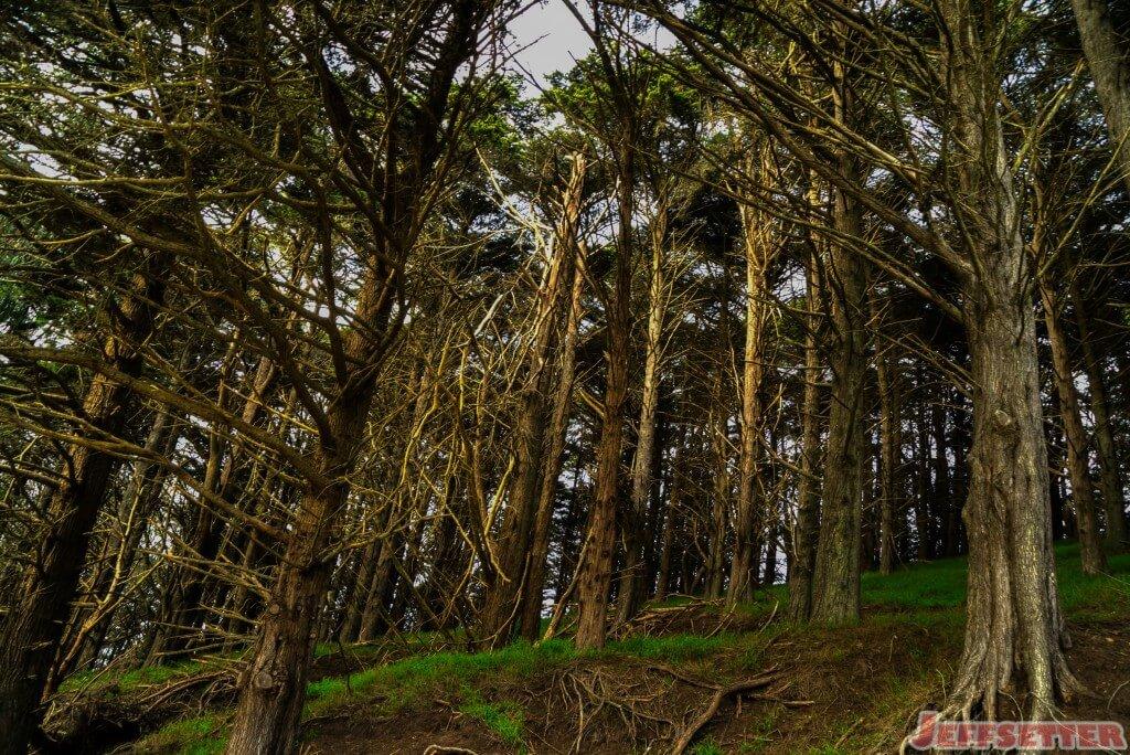 Golden Gate Hike-2