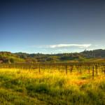 Barn and Fields outside of Healdsburg, California