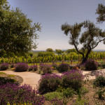 Wine Wednesday: Spring Flowers and New Vines in Sonoma Wine Country