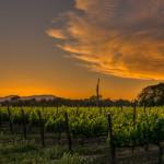 Sunset in Yountville, California (Napa Valley)