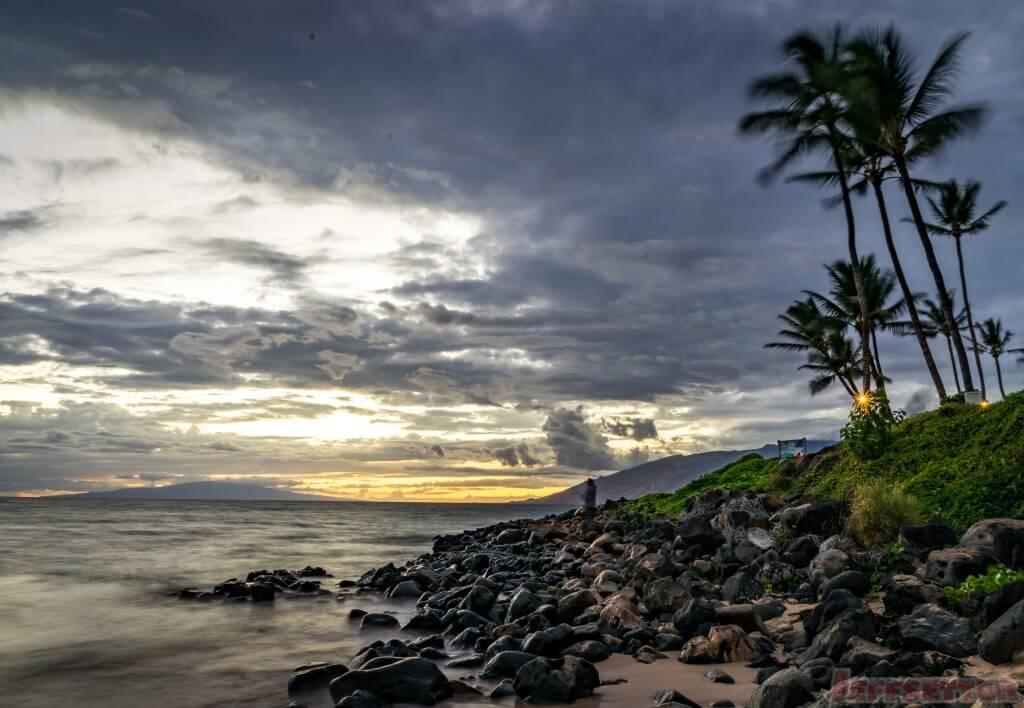Maui Sunset Palms