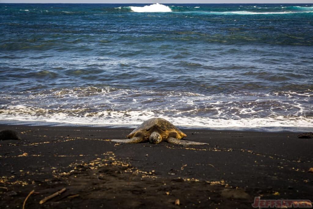 Hawaii Big Island Punaluu Black Sand Beach-18