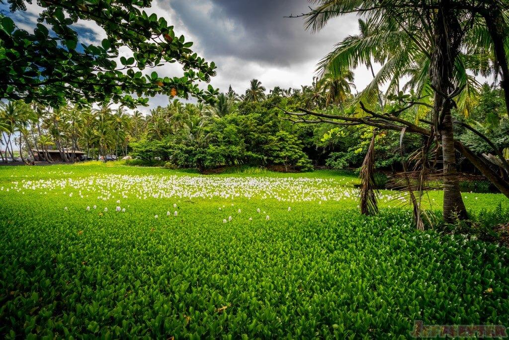 Hawaii Big Island Punaluu Black Sand Beach-19