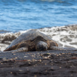 Waves, Turtles and Sand, oh my – Big Island Black Sand Beach
