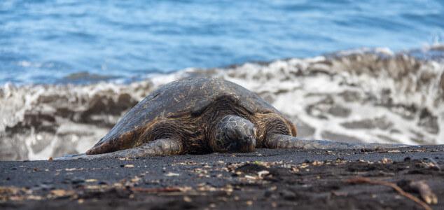 Waves, Turtles and Sand, oh my – Big Island Black Sand Beach