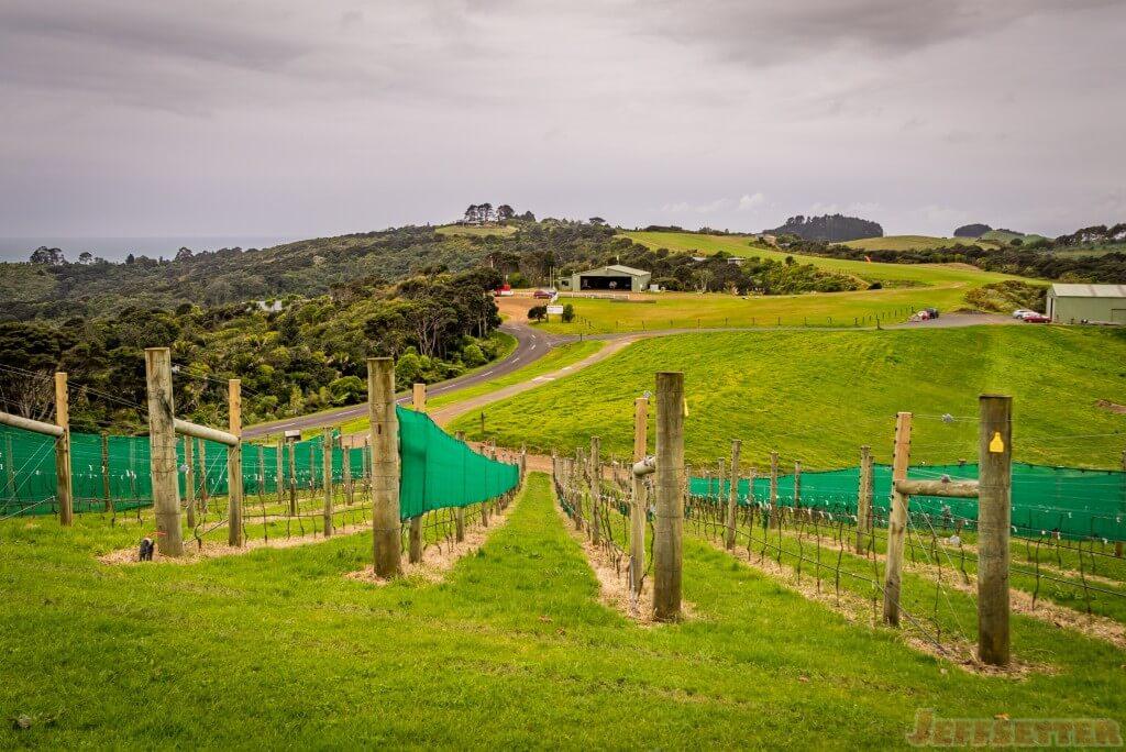 Batch Winery-9
