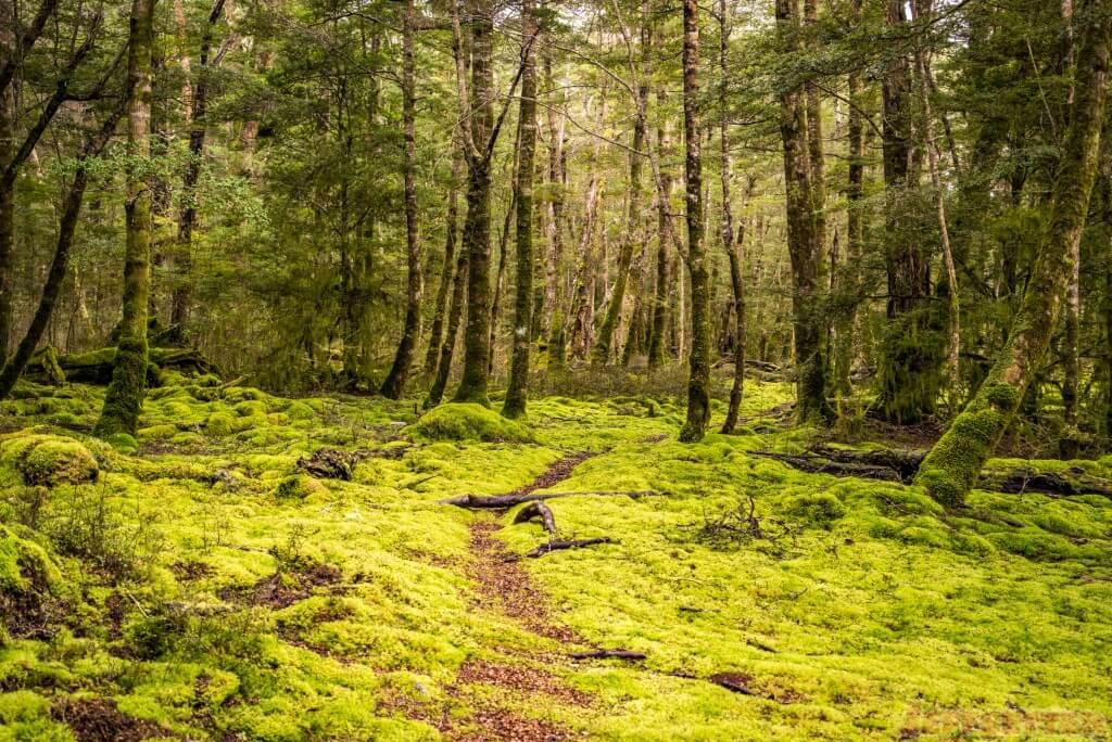 Kepler Track near Lake Te Anau - Fiordlands National Park