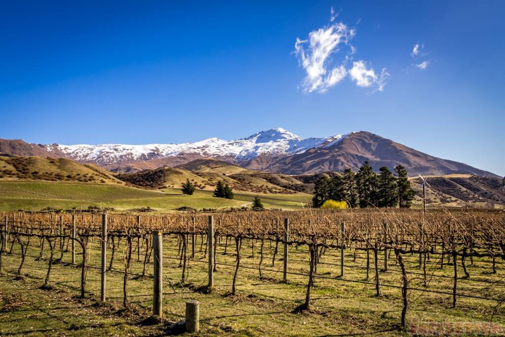 Peregrine Winery-2