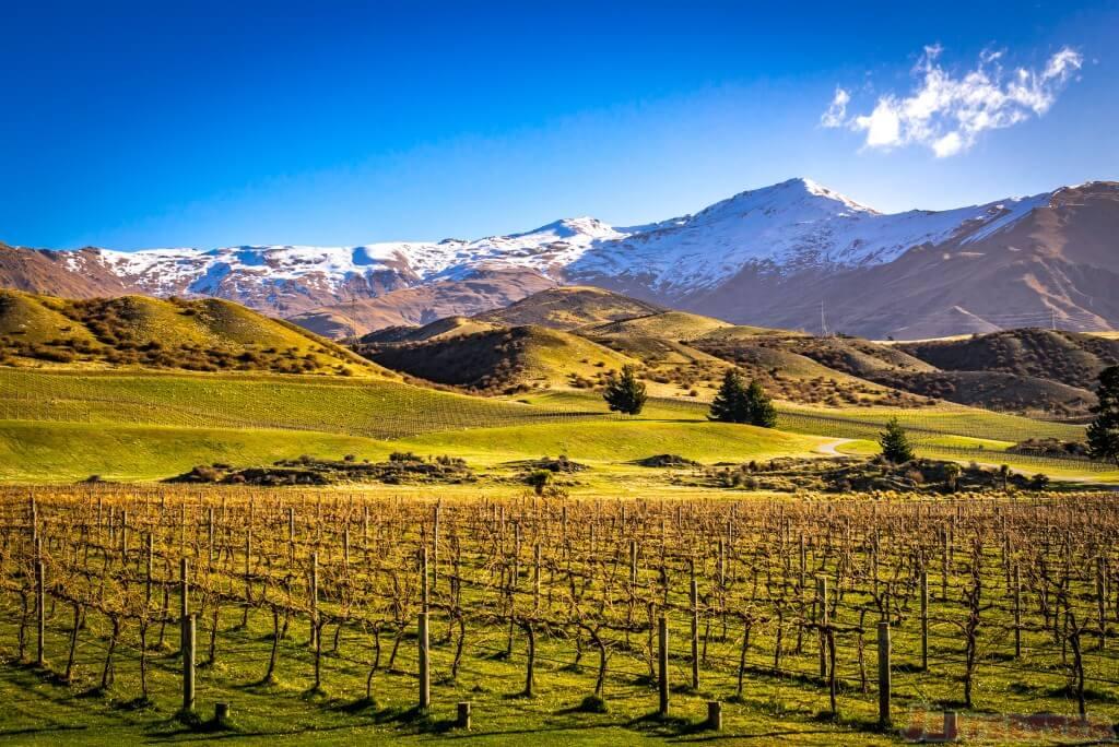 Peregrine Winery-5
