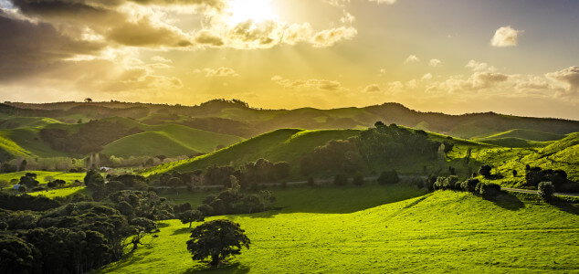 A Few Beautiful Landscapes of Waiheke Island in New Zealand