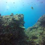 Manta Ray Dive – Big Island, Hawaii