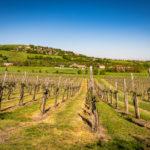Italy – Emilia Delizia Food Tour [Review]