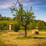 Emilia Delizia Food Tour – Winery Luncheon