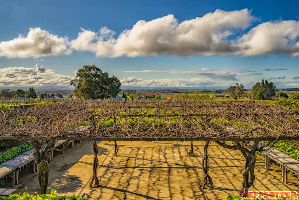black-barn-vineyards-2