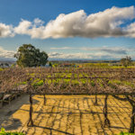 New Zealand Road Trip – Black Barn Vineyards