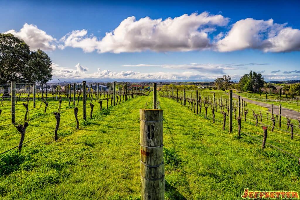 black-barn-vineyards-3
