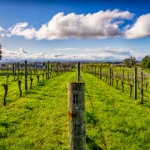 New Zealand Road Trip – Martinborough [Wine Region]