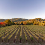 A Gourmet Adventure Through Northern California