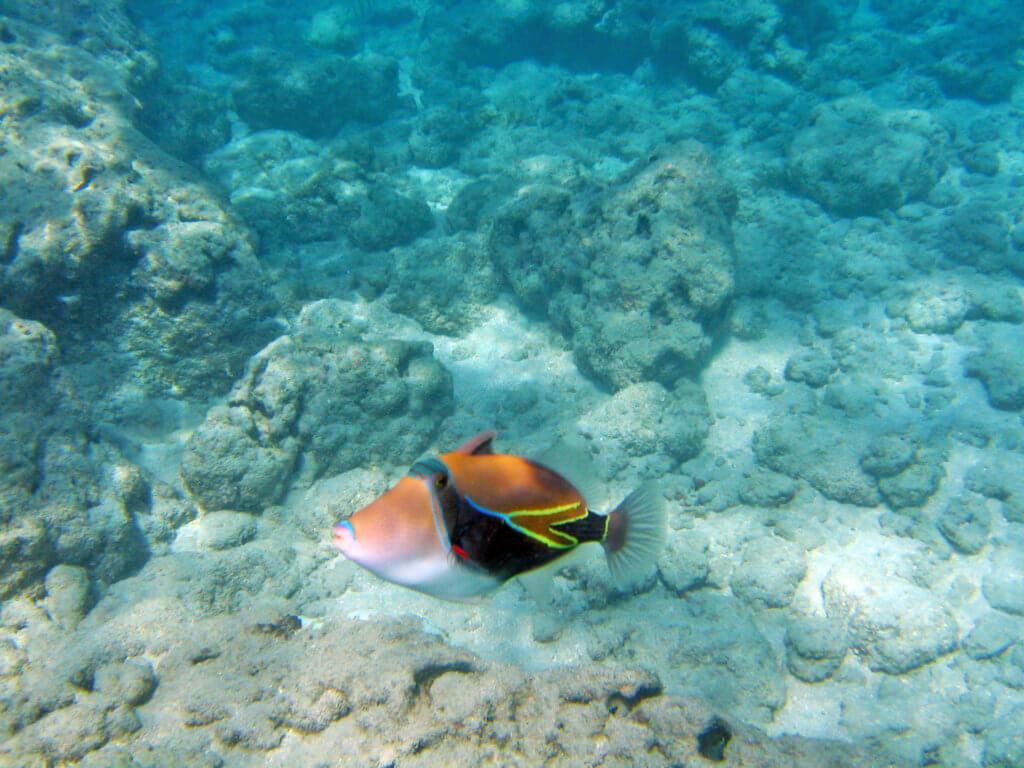 Hanauma Bay Makes Remarkable Recovery
