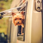 best pet friendly rvs for cats or dogs