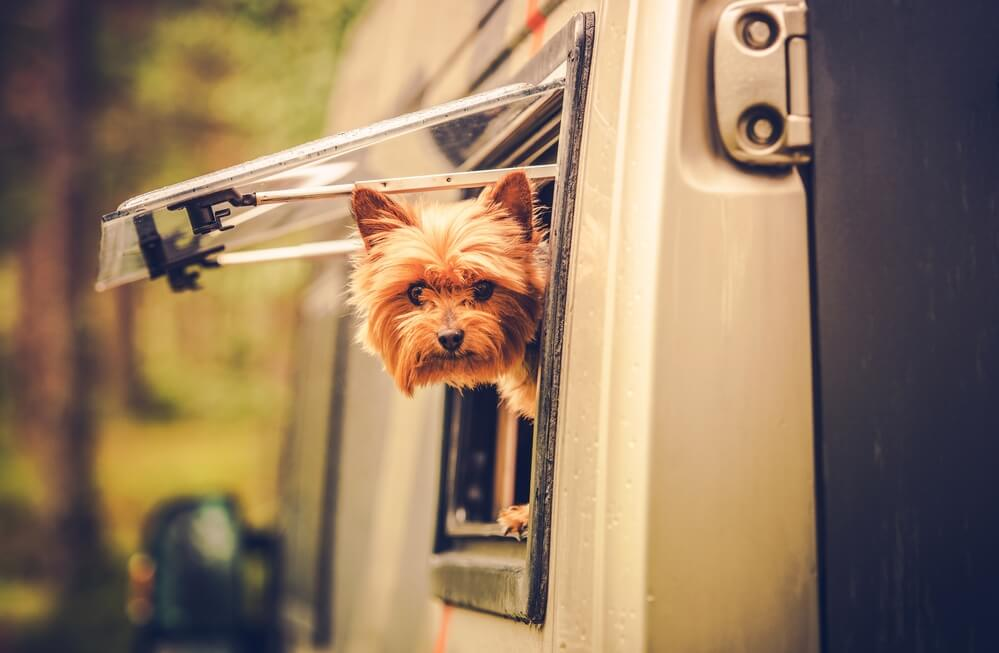 best dog ramp for your RV